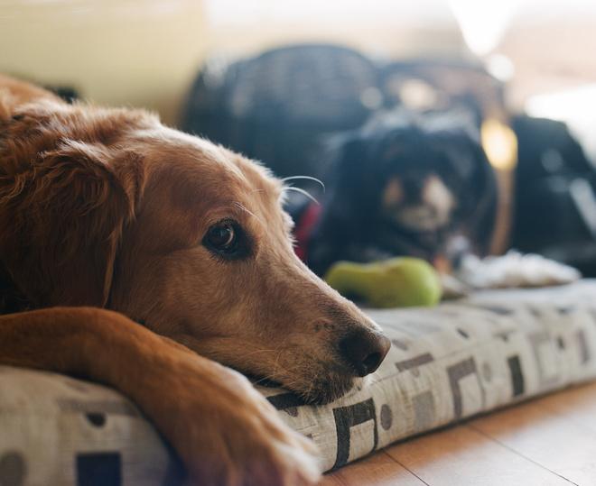 Выбираем, какие собаки лучше для квартиры