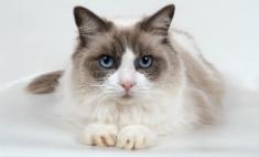 Голосуй за самых милых белгородских котов и кошечек!
