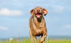 Британец умер из-за слюны любимой собаки