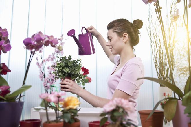 подкормка для цветов
