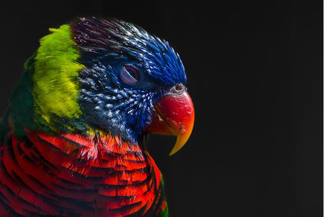 фотовыставка «Природа смотрит на тебя»