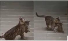 видео кошка карантине ждут