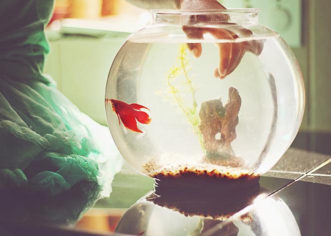 фильтры для аквариума видео