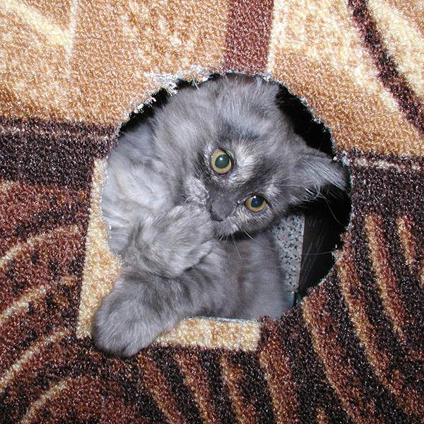 Самые прикольные коты и кошки Кирова
