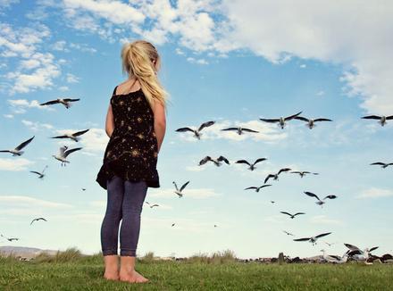 Картинки по запросу своя стая птицы