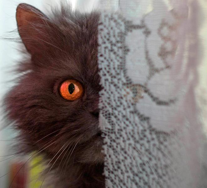 Топ 10 милых рязанских котиков
