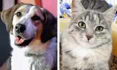 котопёс недели кошка мэри собака арлет