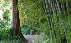 Каждому пятому виду растений на Земле грозит исчезновение
