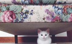 Как воспитывать котенка правильно, чтобы он был ласковым
