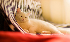 Топ-20 самых милых новосибирских котов и кошечек: голосуй!