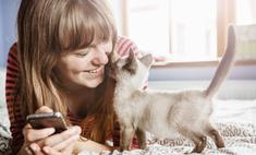 Котенок не ходит по большому: причины и домашние средства помощи