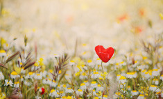 Стала известна дата зарождения любви на Земле