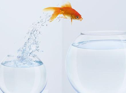 Золотая рыбка в аквариуме