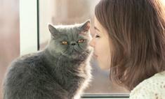 Ромашка, массаж и кошка: снимаем стресс дома