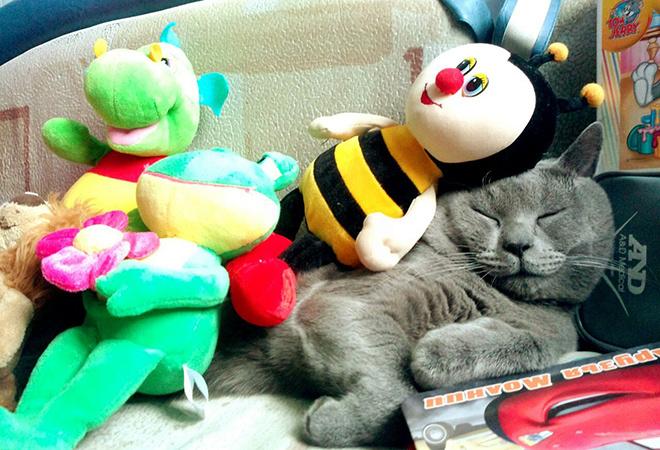 Топ-20 самых мимишных котиков Петербурга