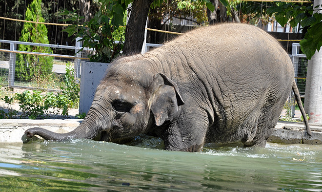 Семейство слонов
