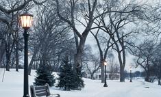 Московские елки берут под круглосуточную охрану