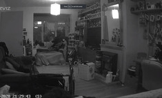 Женщина поделилась видео с оптической иллюзией: ее покойный кот «материализуется» на диване