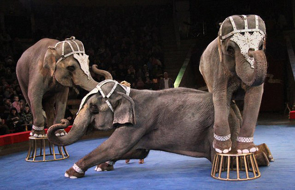 Карнавал слонов в Нижнем Новгороде