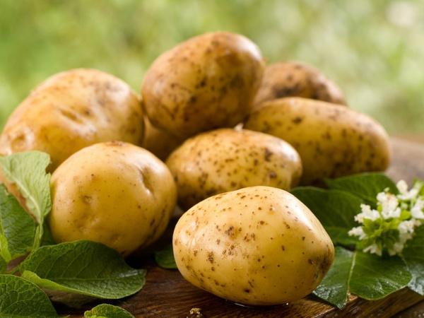 Картофель для лечения