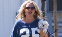 Бритни Спирс потратила на одежду для собак $1,5 тыс.