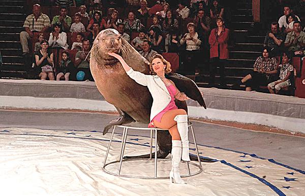 Цирковое представление «Морские львы»