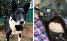 котопёс недели собака лара кот цыган