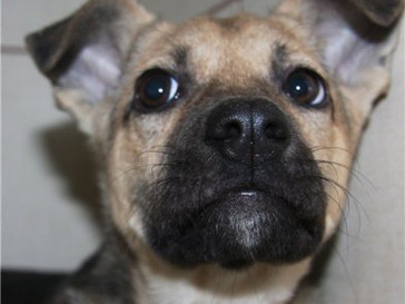 Бездомный пес из приюта для животных