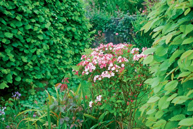 2. Природный стиль. Сад имитирует лесную поляну, чтоопределяет выборцветовой гаммы: здесь преобладают оттенки зеленого снебольшим количеством ярких акцентов– цветов. Никаких роз втакомсаду, конечно, бытьнеможет. Лучше всего здесь будут смотреться ромашки, колокольчики имаргаритки