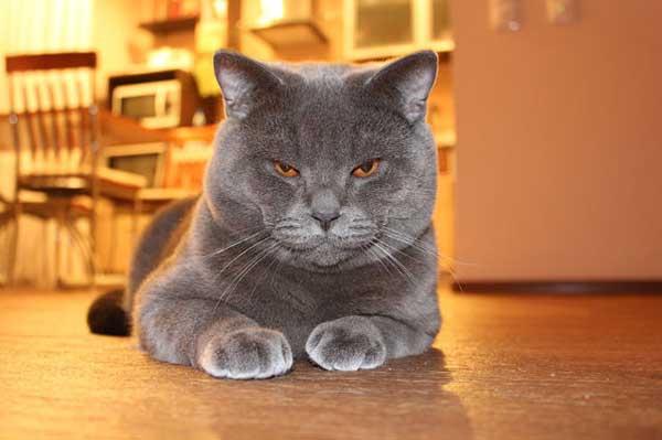 Самые забавные коты Сургута