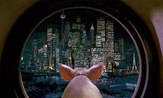 борцы права животных требуют перестать ругаться словами свинья
