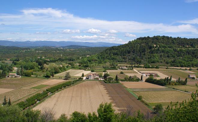 Цветение лаванды в Провансе