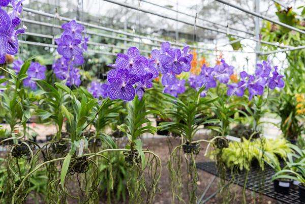 Условия для цветения орхидеи