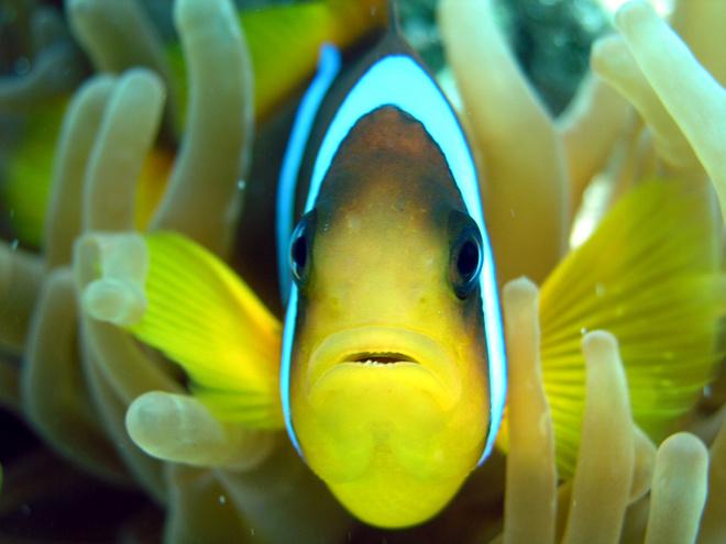 Маленькие полосатые рыбки не терпят одиночества