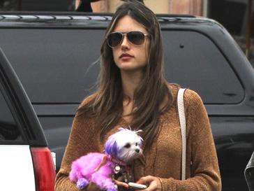 Алессандра Амброзио (Alessandra Ambrosio) покрасила свою собаку сразу в несколько оттенков розового