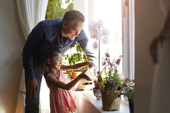 Домашний цветок декабрист