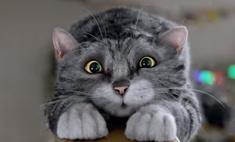 Видео дня: рождественская реклама с милейшим котом