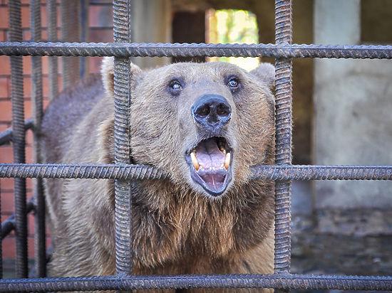 Медведи из Сочи