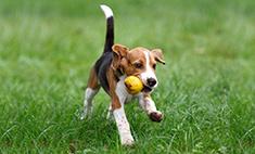 День собак в Ростове: выбираем лучшего друга!