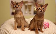 Без кота и жизнь не та! 12 кошачьих историй