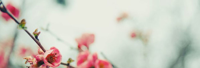 Терапия красотой: конкурс фотографий