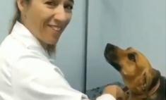 Терпеливая собака на приеме у ветеринара умилила Интернет (видео)