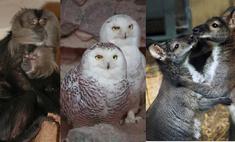 10 самых сладких парочек Екатеринбургского зоопарка
