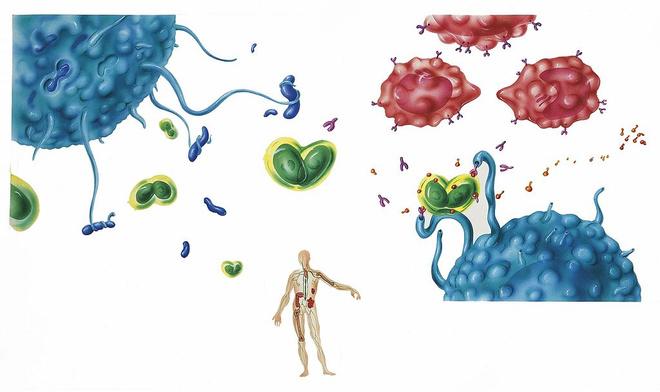 моноциты повышены у ребенка