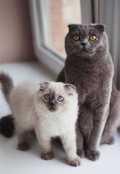 Коты: смешные фото и видео