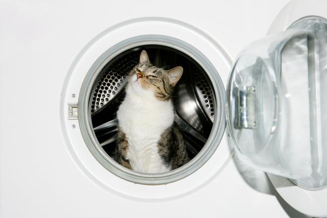 в какое отделение засыпать стиральный порошок