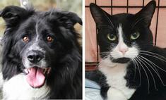 Котопёс недели: пёс Бим и кот Василь Василич