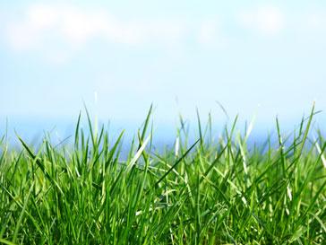 WWF в шестой раз организует благотворительный Бал на траве