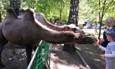 Детки не в клетке: все контактные зоопарки Новосибирска