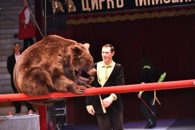 В Воронеже выступили «Легенды цирка»
